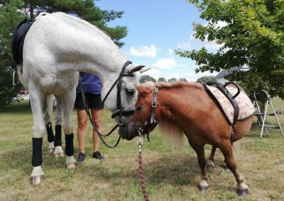Ozolnieku svētkos ik gadu kopā ar ZMC Mušķi zirgiem, 2021